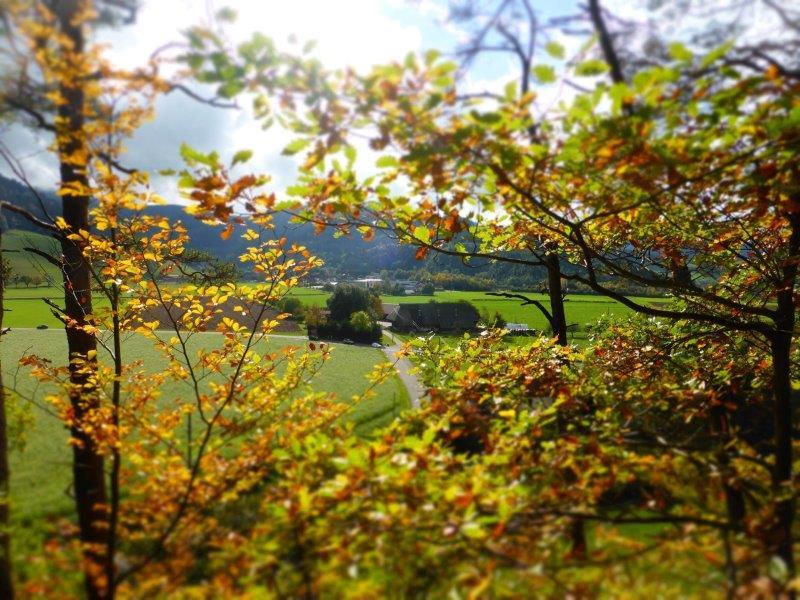 Blick ins schöne Dreisamtal. Eine Wiese, Berge im Hintergrund, im Vordergrund ein grüner Busch.